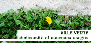 ville verte
